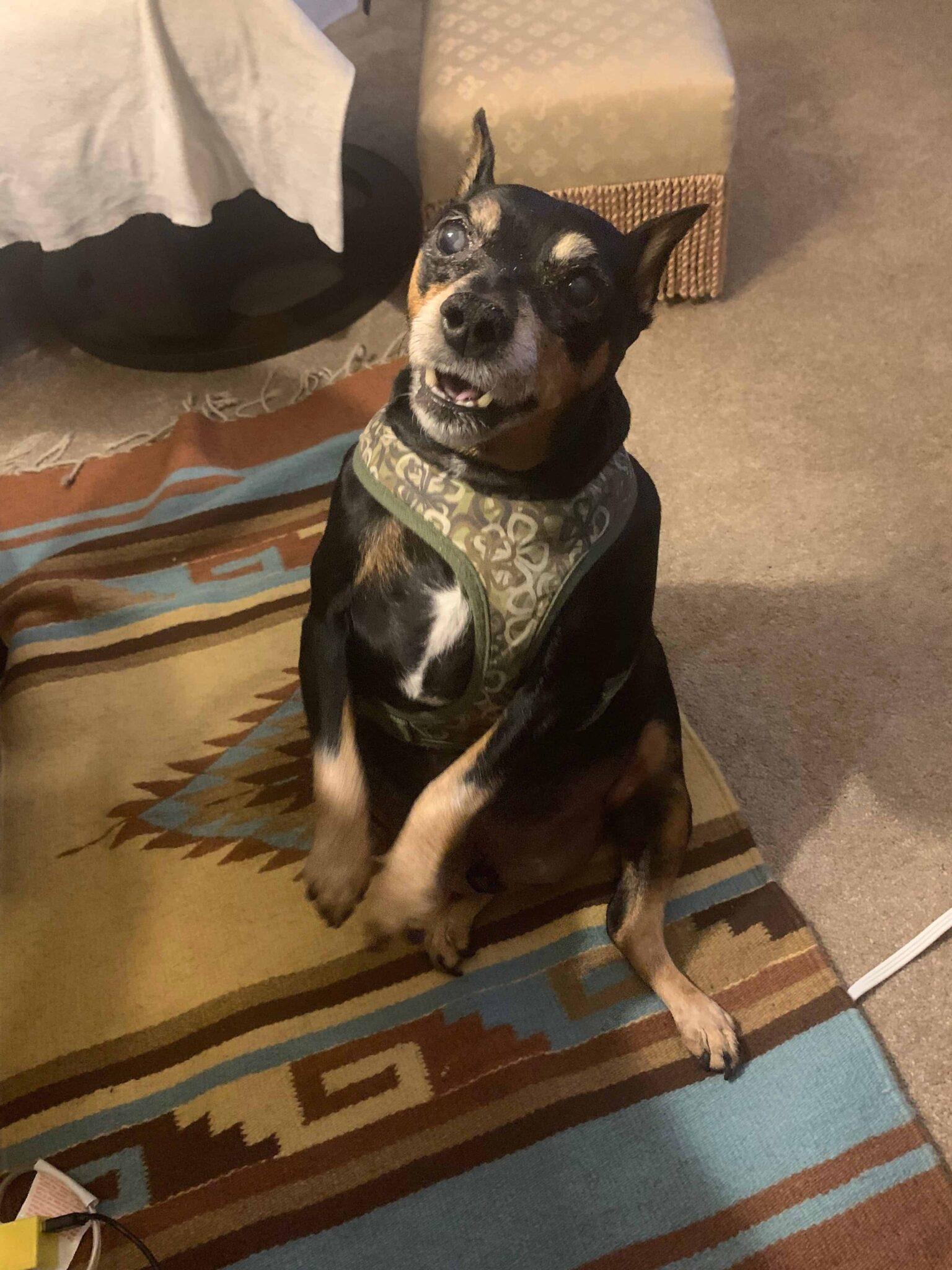 Charlie : Rectory Dog